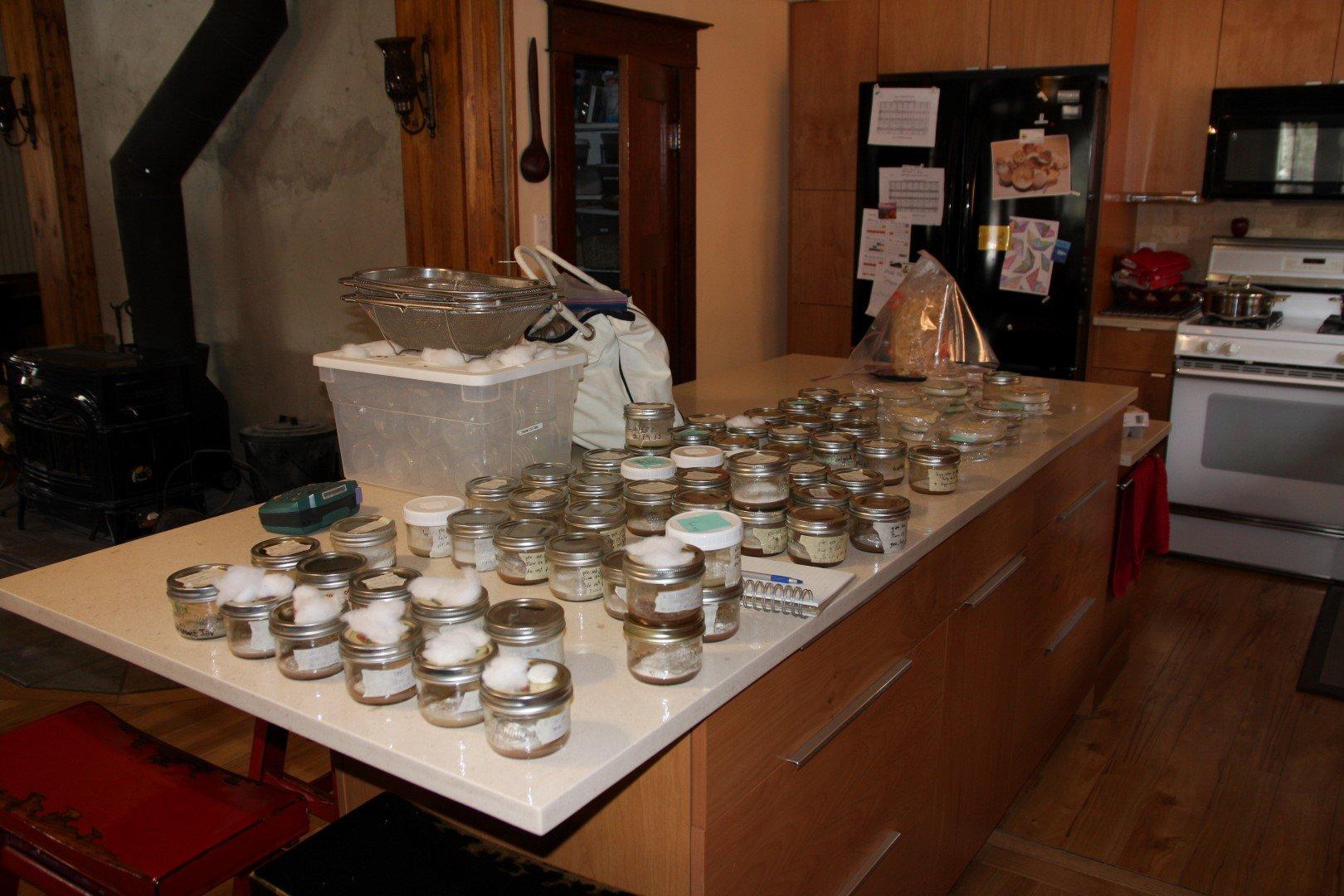 Petri Jars