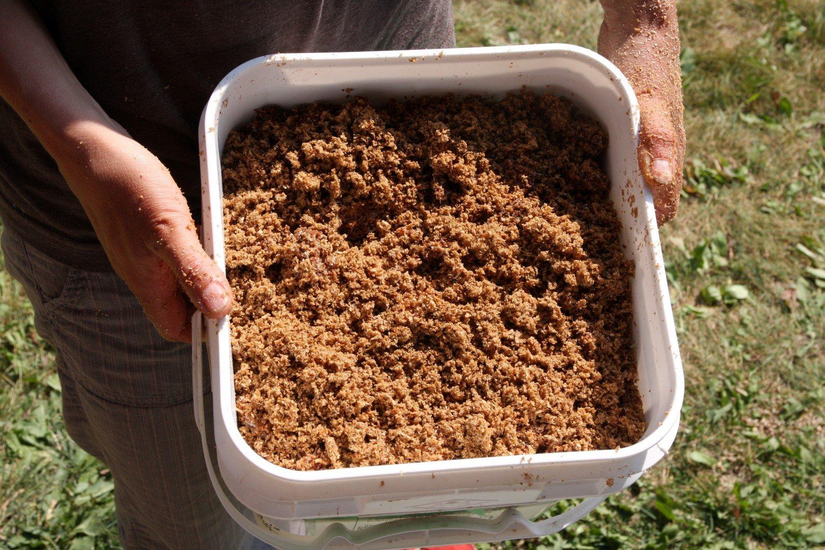 Sawdust buckets | Canadian culinary and medicinal mushroom