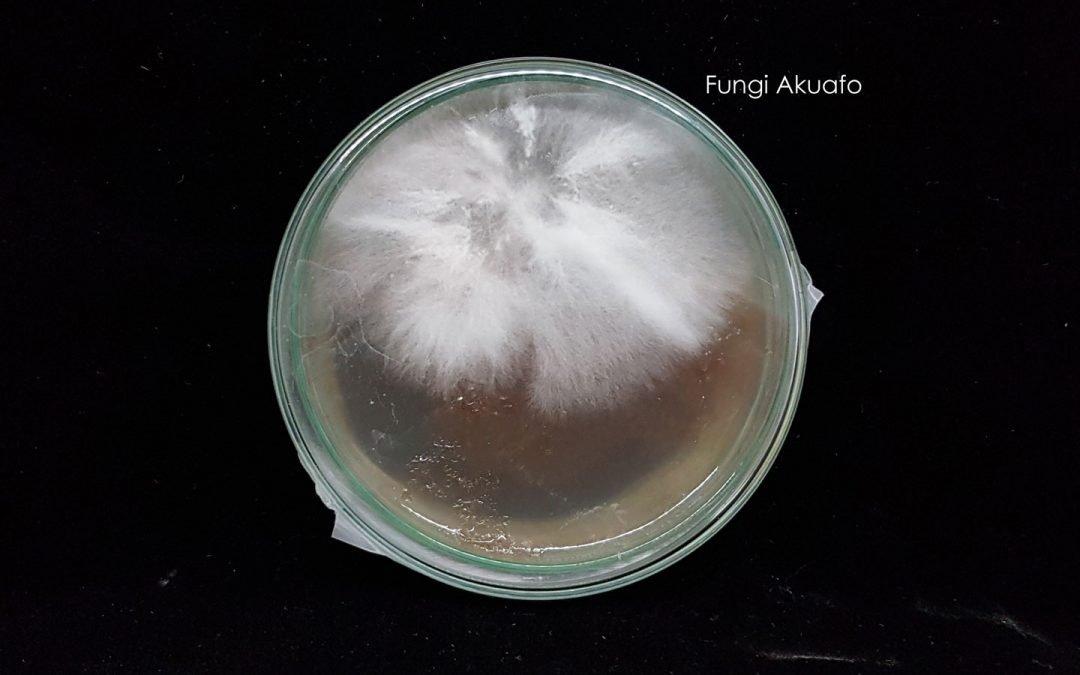 Petri Spores