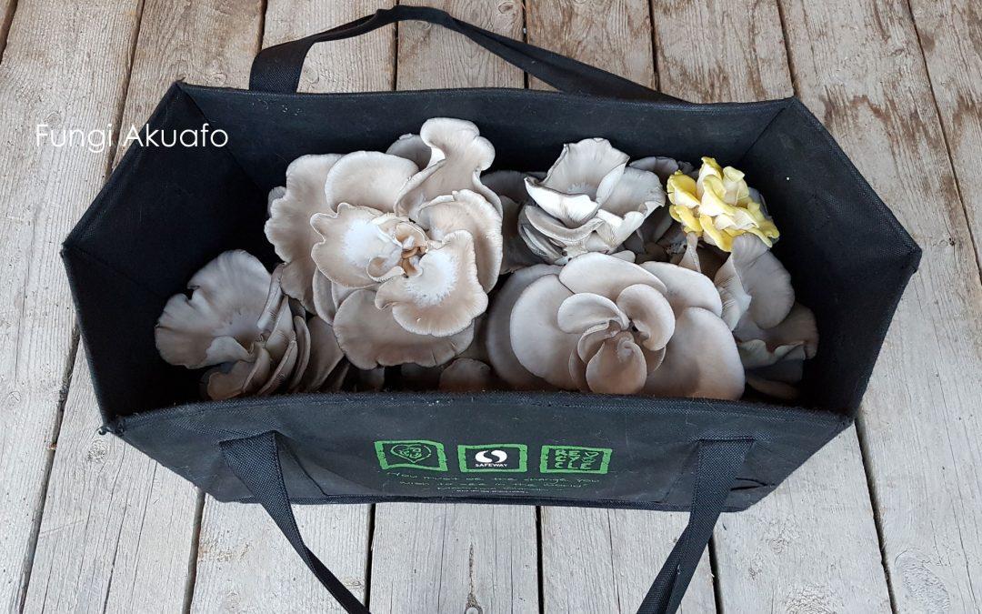 Fungi Greenhouse – Harvest