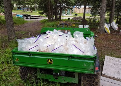Inoculated bags