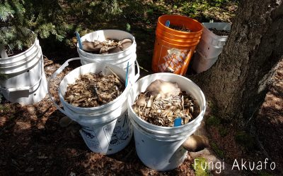 New Video – Wood Chip Buckets