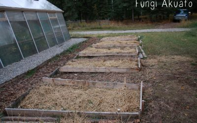 Straw and using it as garden mulch