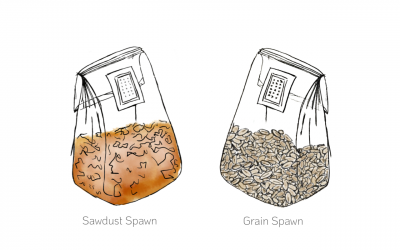 Summer Solstice: Our Seasonal Shift from Sawdust to Grain Spawn
